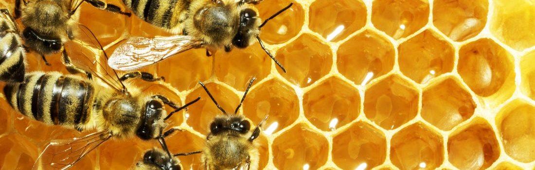 Κερί μέλισσας – Vegan?